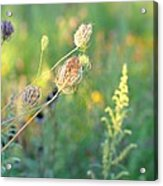 After August Acrylic Print