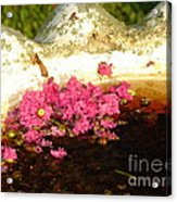 After Bloom Acrylic Print