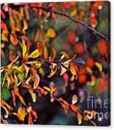 After The Autumn Rain 1 Acrylic Print