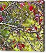 After The Autumn Rain 2 - Digital Paint Acrylic Print