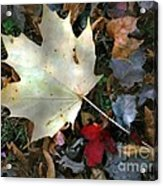 After The Frost Acrylic Print
