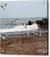 After The Spring Thaw Acrylic Print