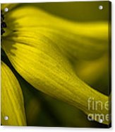 Afternoon Flower Acrylic Print
