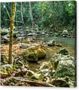 Afternoon In The Jungle Acrylic Print