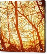 Afternoon Love  Acrylic Print