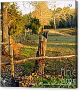Afternoon Orange Gold Glow On Old Broken Fence Acrylic Print