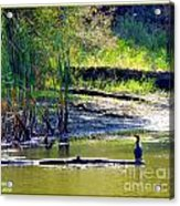 Afternoon View Acrylic Print