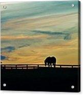 Against A Painted Sky Acrylic Print
