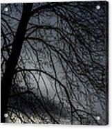 Against A Winter Sky Acrylic Print
