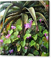 Agave And African Violets Acrylic Print