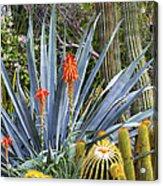 Agave And Cactus Acrylic Print