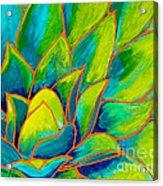 Agave Glow Acrylic Print