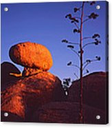 Agave Stalk And Boulder Acrylic Print