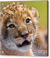 Age Of Innocence Acrylic Print