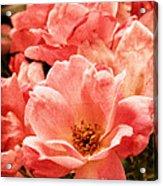 Aged Rose  Acrylic Print
