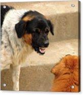 Aggressive Dogs Acrylic Print