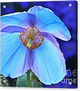 Aglow In Blue Wide View Acrylic Print