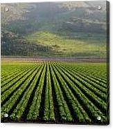 Agricultural Rows Acrylic Print