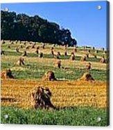 Agriculture - Contour Strips Acrylic Print