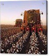 Agriculture - Cotton Harvesting  San Acrylic Print