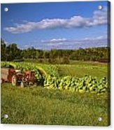 Agriculture - Fields Of Maturing Flue Acrylic Print by R. Hamilton Smith