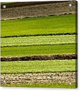 Agriculture Layers Fields And Meadows Acrylic Print