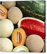 Agriculture - Mixed Melons, Watermelon Acrylic Print