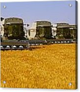 Agriculture - Six Gleaner Combines Acrylic Print