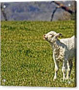 Ahhhh Spring Is Here Acrylic Print