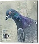 Air Mail Acrylic Print