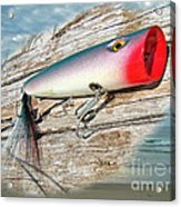 Ajs Big Mouth Popper Saltwater Fishing Lure Acrylic Print