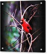 Alabama Rain - Cardinal Acrylic Print