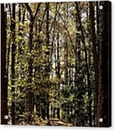 Alabama Woodlands In Spring 2013 Acrylic Print