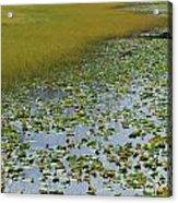 Alaska - Lily Pond And Marshy Meadow Acrylic Print
