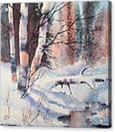 Alaska Birch II Acrylic Print