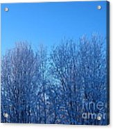 Alaska Sunrise Lighting Willows In Winter Acrylic Print