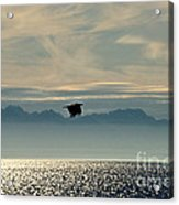 Alaskan Eagle At Sunset Acrylic Print