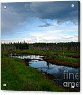 Alaskan Moose 3 Acrylic Print