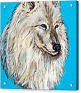 Alaskan White Wolf Original Forsale Acrylic Print