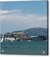 Alcatraz With Pelicans Acrylic Print
