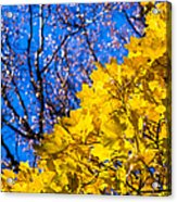 Alchemy Of Nature - Golden Streams Acrylic Print