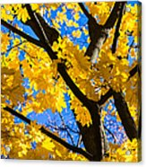 Alchemy Of Nature - Refining The Sungold Acrylic Print