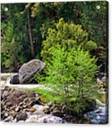 Alder Trees In White Water Acrylic Print