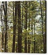 Aldridge Lake Trail Acrylic Print