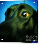 Alex Has A Dog Acrylic Print by Jackie Bodnar
