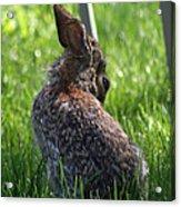 Alien Bunny Acrylic Print