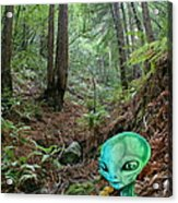 Alien In Redwood Forest Acrylic Print