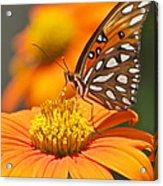 All About Orange 3236 3 Acrylic Print