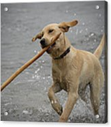 All About The Stick Acrylic Print by Loree Johnson