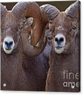 All Eyes Acrylic Print